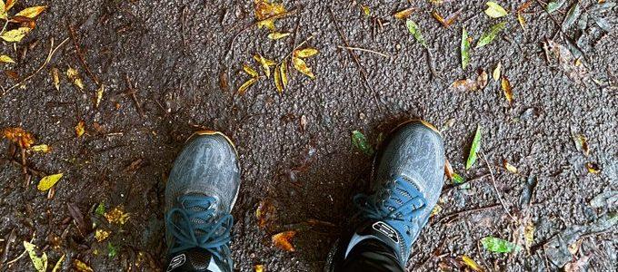 Weekly Walk in Primrose Hill