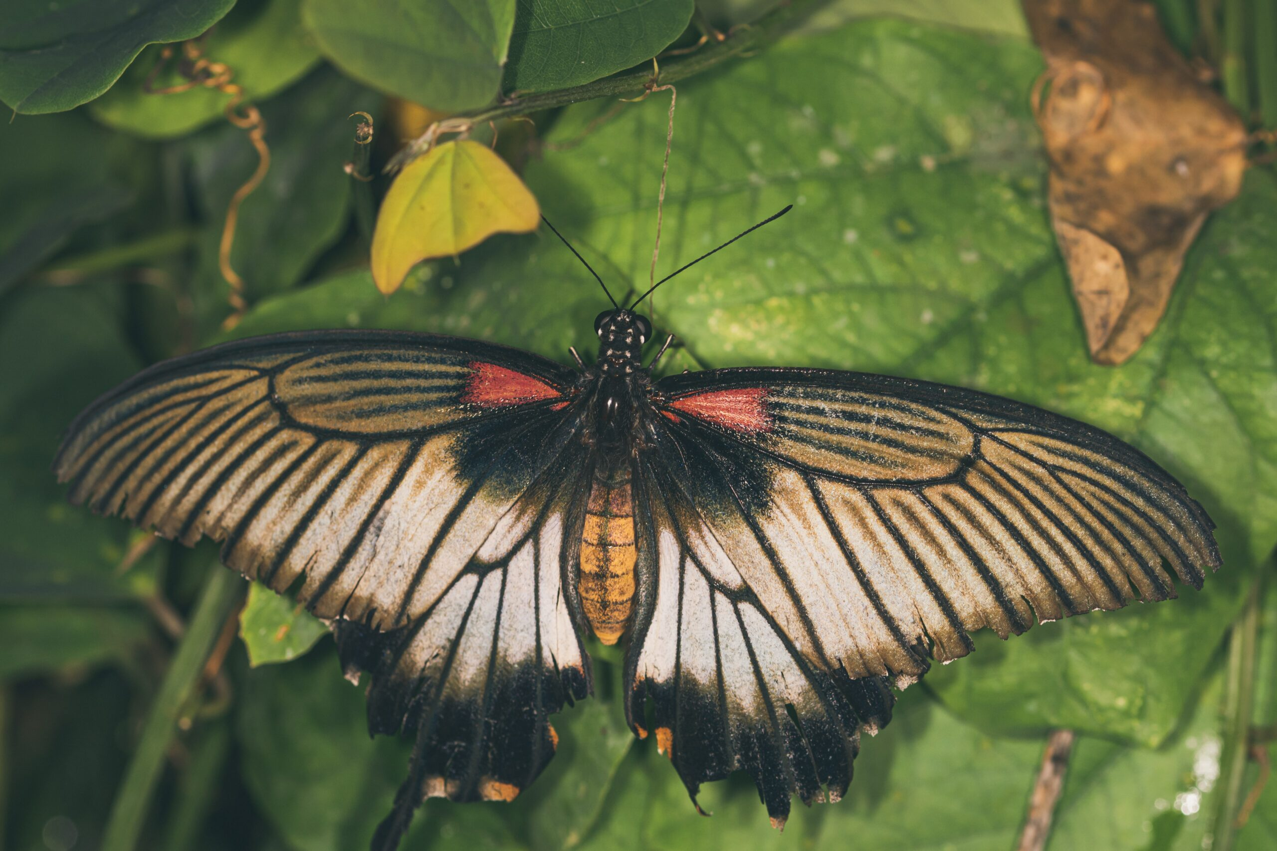 Primrose Hill Walks - Moth I.D Walk