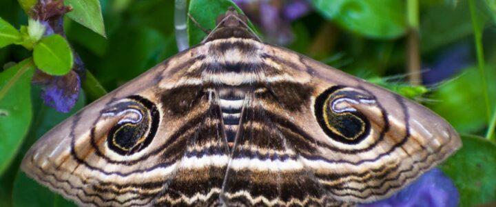Moth I.D Walk